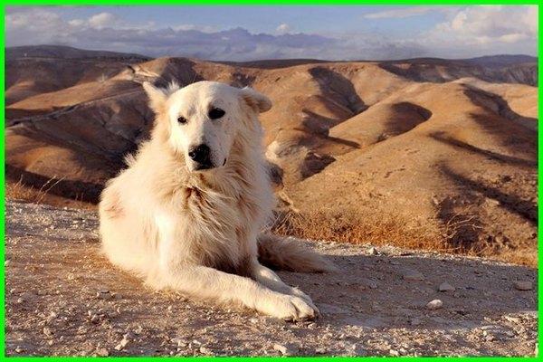 hewan setia kawan, hewan setia di dunia, hewan yang setia adalah, hewan paling setia apa, hewan paling setia itu apa, hewan paling setia didunia, hewan paling setia kepada manusia, hewan sangat setia, hewan yang sangat setia