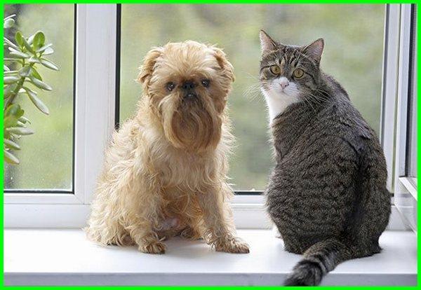 hewan apartment, apartemen hewan peliharaan, apartemen hewan peliharaan jakarta, hewan peliharaan di apartemen, apartemen ramah hewan jakarta, apartemen ramah hewan bandung, apartemen untuk hewan