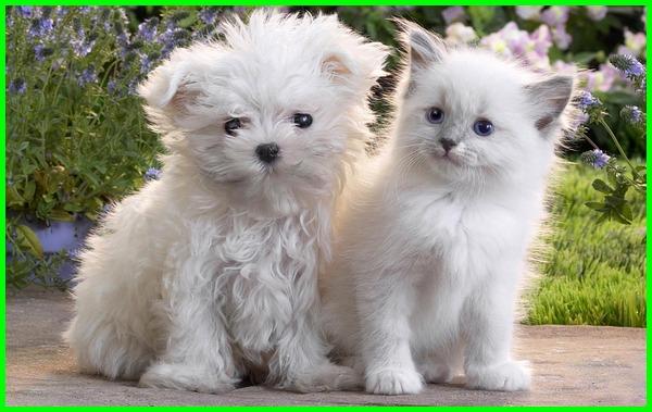 hewan peliharaan yang mudah jinak, hewan peliharaan yang bisa dilatih, hewan peliharaan yang mudah dilatih, hewan peliharaan yg bisa dilatih, hewan peliharaan yang dapat dilatih, gambar anak kucing dan anak anjing