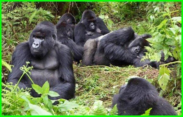 hewan yang hidup berkelompok disebut, hewan yang selalu berkelompok, hewan yang hidupnya berkelompok, hewan berkelompok, hewan berkelompok disebut, hewan yang berburu secara berkelompok, hewan yang hidup dengan cara berkelompok disebut, hewan selalu berkelompok, hewan yg berkelompok, nama hewan yang hidup berkelompok, mengapa hewan hidup berkelompok