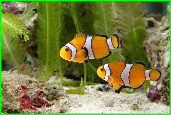 ikan lucu di dunia, ikan lucu aquarium, ikan lucu ikan lucu, ikan berenang lucu, ikan lucu dan cantik, foto ikan lucu dan unik, foto ikan lucu, ikan lucu gendut, jenis ikan lucu