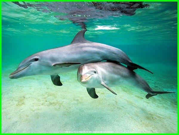 ikan lumba2 lucu, ikan lumba lucu, video lucu ikan lumba lumba, ikan lumba-lumba video lucu