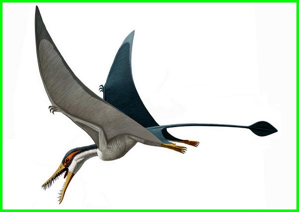 dinosaurus bisa terbang, dinosaurus yang bisa terbang, dinosaurus yg bisa terbang, dinosaurus yang bisa terbang namanya, burung dinosaurus terbang, gambar dinosaurus terbang, dinosaurus ikan terbang, nama dinosaurus terbang, dinosaurus yang terbang