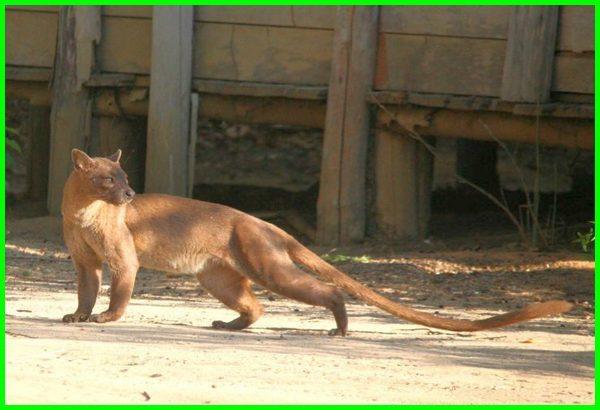 binatang ekor panjang, hewan berekor panjang, binatang ekor panjang bukan togel, nama hewan ekor panjang, hewan ekor nya panjang, hewan yang ekor panjang