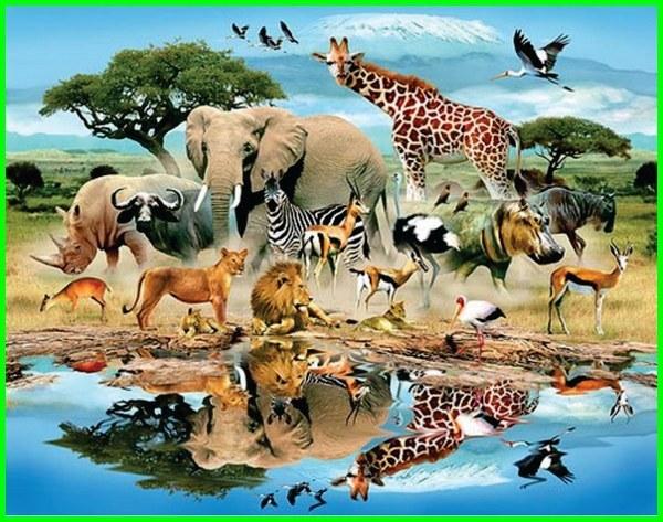 apa itu klasifikasi makhluk hidup, apa dasar klasifikasi makhluk hidup, apakah manfaat klasifikasi makhluk hidup, apakah tujuan klasifikasi makhluk hidup, apakah dasar klasifikasi makhluk hidup, apakah klasifikasi makhluk hidup itu, nama klasifikasi makhluk hidup, klasifikasi makhluk hidup dan pengertiannya, klasifikasi makhluk hidup.com