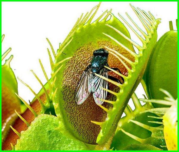 karakteristik hewan dan tumbuhan, karakteristik sel hewan dan sel tumbuhan, karakteristik serat hewan dan tumbuhan, karakter hewan dan tumbuhan, perbedaan karakter hewan dan tumbuhan, karakteristik sel hewan dan sel tumbuhan