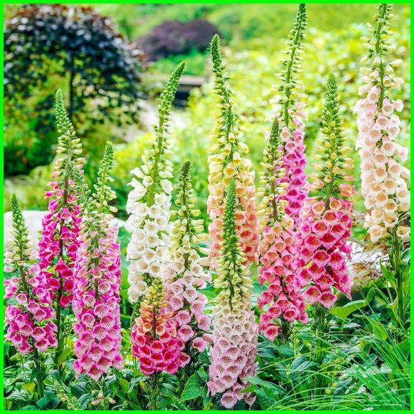 benarkah tanaman hias beracun, tanaman hias beracun di sekitar kita, tanaman hias beracun mematikan, jenis tanaman hias yang mengandung racun, tanaman hias paling beracun