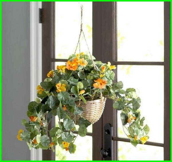 tanaman hias gantung outdoor