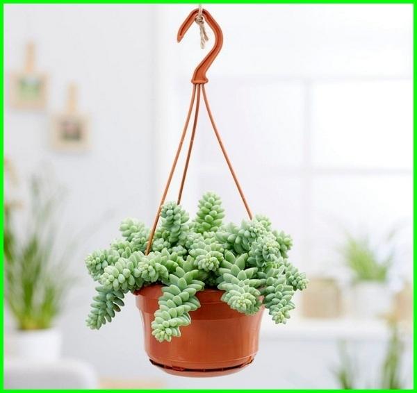tanam kaktus pot, tanaman pot kaktus, tanaman kaktus dalam pot, tanaman hias kaktus di pot, pot untuk tanaman kaktus