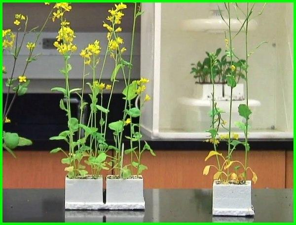 tanaman yang cepat tumbuh, tanaman yang cepat tumbuh dan menguntungkan, tanaman yg cepat tumbuh, pohon cepat tumbuh besar, pohon yg cepat tumbuh besar, tanaman hias yg cepat tumbuh, jenis tanaman yg cepat tumbuh, tanaman lebih cepat tumbuh, pohon yang cepat tumbuh tinggi