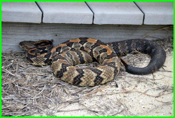 usir ular dari rumah, usir ular dalam rumah, cara usir ular dari rumah, cara usir ular di rumah, cara usir ular masuk rumah,cara usir ular dalam rumah , tips usir ular masuk rumah, mengusir ular dari rumah, mengusir ular dalam rumah, mengusir ular di rumah, mengusir ular didalam rumah, mengusir ular masuk rumah