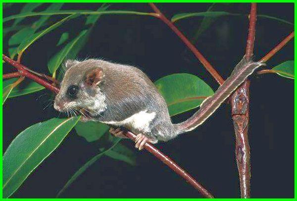 mamalia apa yang bisa terbang, mamalia yg dpt terbang, hewan mamalia dapat terbang, hewan mamalia yang terbang yaitu, hewan mamalia yang terbang, hewan mamalia yg terbang, binatang mamalia yang terbang