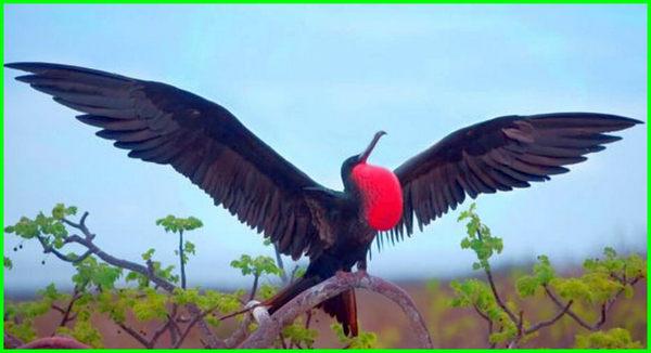 hewan aves dan contohnya, contoh hewan aves dan ciri-cirinya, contoh hewan aves dan nama latinnya, hewan dalam aves, hewan golongan aves, contoh hewan golongan aves, hewan yang termasuk golongan aves, ciri ciri hewan golongan aves, hewan jenis aves, hewan jenis aves adalah, contoh hewan jenis aves, berikut merupakan hewan jenis aves adalah, nama hewan aves, hewan aves yaitu, 10 hewan aves