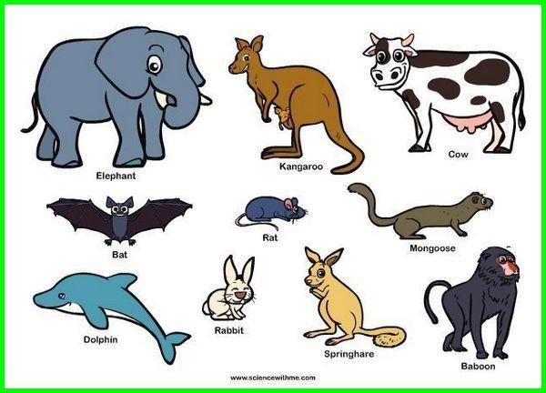 hewan mamalia ada dua jenis yaitu, hewan mamalia apa aja, hewan mamalia adalah brainly, hewan mamalia contohnya brainly, hewan mamalia beserta ciri-cirinya, hewan mamalia adalah, hewan mamalia darat