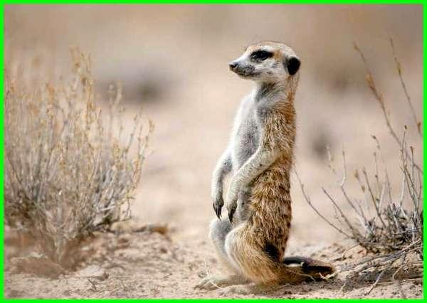 hewan yang introvert, hewan introvert
