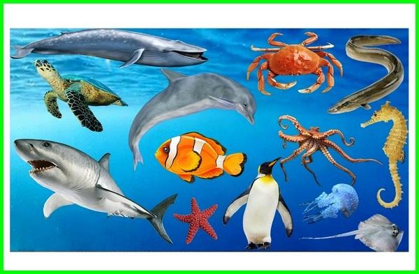 10 karakteristik hewan, 9 karakteristik dari dunia hewan, karakteristik fisik hewan, karakteristik gerakan hewan, karakteristik hidup hewan, karakteristik hewan ini, karakteristik jaringan hewan, jelaskan karakteristik hewan, karakteristik sel hewan