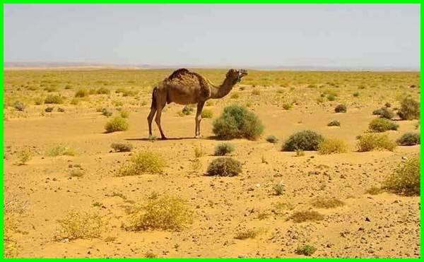 karakteristik hewan di bioma gurun, karakteristik hewan dan tumbuhan bioma gurun, karakteristik hewan yang hidup di bioma gurun,karakteristik hewan yg hidup di bioma gurun, karakteristik hewan dan tumbuhan di bioma gurun, karakteristik hewan dan tumbuhan yang hidup di bioma gurun, bagaimana karakteristik hewan yang hidup di bioma gurun, karakteristik hewan dan tumbuhan yang hidup di bioma tundra