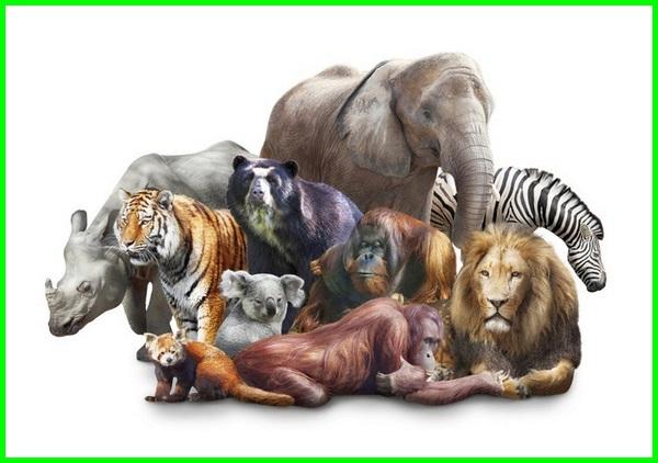 ciri mamalia dan contohnya, ciri khas mamalia adalah, ciri hewan mamalia adalah, ciri mamalia berikut, ciri binatang mamalia, ciri hewan mamalia brainly, ciri ciri mamalia berikut adalah, mamalia ciri cirinya, ciri ciri hewan mamalia, ciri ciri mamalia