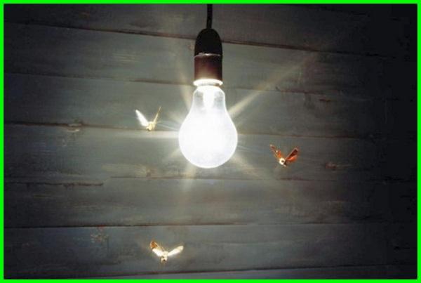 kenapa serangga suka lampu, kenapa serangga suka cahaya lampu, mengusir serangga lampu, serangga di lampu, serangga dekat lampu, serangga pada lampu, serangga penyuka lampu, serangga yang suka cahaya lampu, lampu menarik serangga