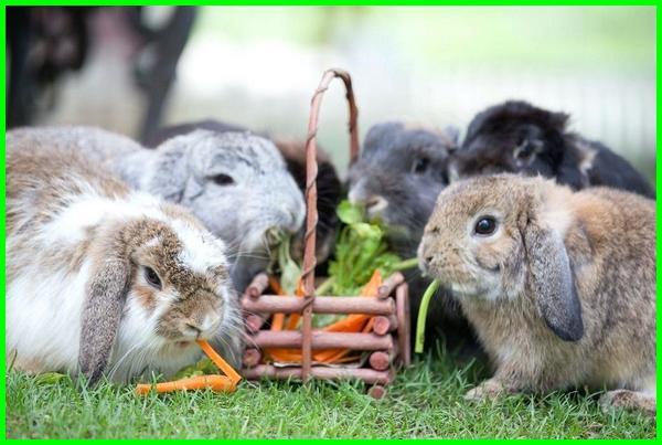 apa saja makanan kelinci kecil, apa saja makanan kelinci dewasa, apa saja makanannya kelinci, apa saja makanan kelinci yang bagus, apa saja makanan sehat untuk kelinci, apa makanan kelinci anggora, apa makanan kelinci kecil, apa makanan kelinci yang masih kecil, apa makanan kelinci brainly, apa makanan kelinci yang sehat, apa makanan kelinci selain wortel, apakah makanan kelinci
