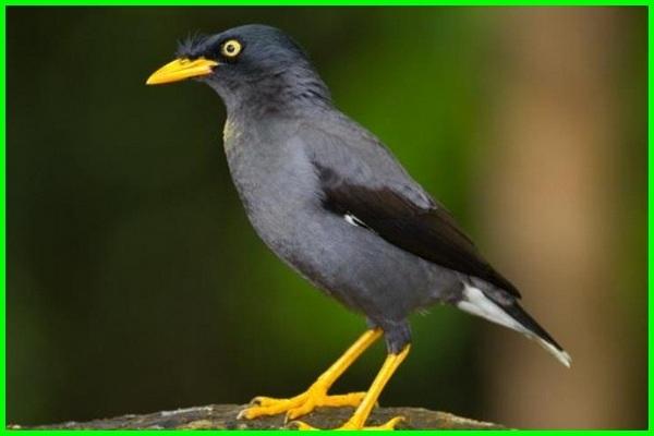 burung peliharaan yang pintar, pelihara burung pintar