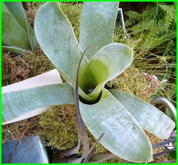 apa saja tumbuhan yang termasuk dalam tumbuhan pemangsa serangga, tumbuhan apa saja yang dapat memakan serangga, contoh tumbuhan yang memakan serangga, contoh tumbuhan yang memangsa serangga adalah, nama tumbuhan yang memakan serangga, tumbuhan yang memakan serangga, tumbuhan yang termasuk pemakan serangga adalah
