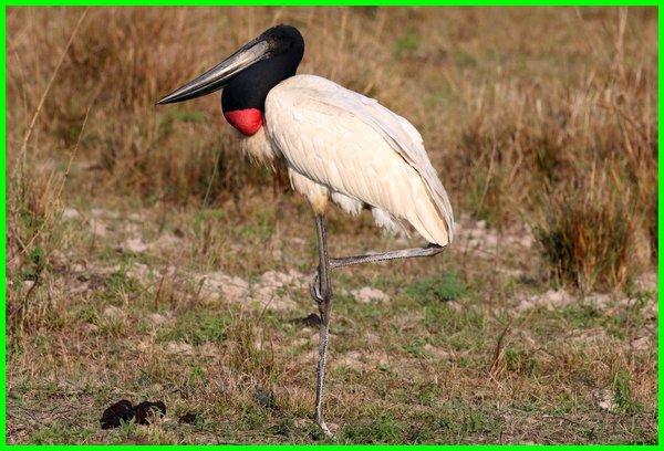 Hewan Dari Huruf J Bahasa Inggris Dunia Fauna Hewan Binatang Tumbuhan Dunia Fauna Hewan Binatang Tumbuhan