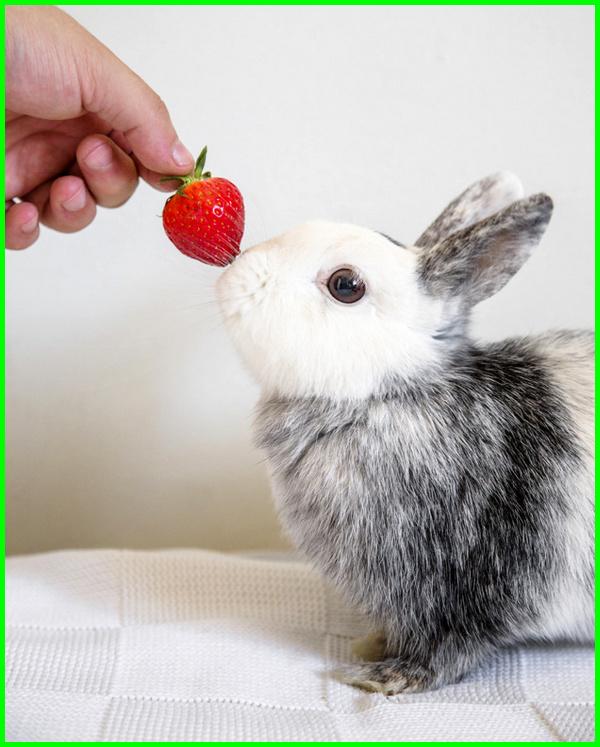 makanan kelinci terbaik, apa makanan kelinci yang sehat, apa makanan kelinci yg baik, apa makanan kelinci yang bagus, makanan kelinci biar sehat, makanan kelinci.com, pakan kelinci cepat gemuk, pakan kelinci cepat besar, makanan favorite kelinci, makanan kelinci hias yang baik, makanan kelinci instan, makanan kelinci import