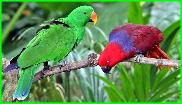 burung peliharaan yang bagus dan murah, nama burung peliharaan yang bagus, jenis burung peliharaan yang bagus, burung peliharaan bagus, burung peliharaan yg bagus, burung peliharaan paling bagus, burung yang bagus untuk peliharaan di rumah, burung peliharaan murah tapi bagus