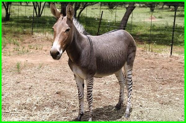 nama hewan huruf z, hewan berawalan huruf z, hewan huruf z selain zebra, hewan huruf a-z, hewan huruf awalan z, binatang huruf a-z, binatang huruf awalan z, hewan dari huruf a-z, nama hewan berawal huruf z