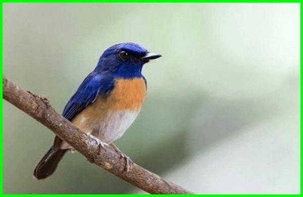 burung peliharaan yang suaranya bagus, nama yang bagus untuk hewan peliharaan burung lovebird, nama yang bagus untuk burung hantu peliharaan, nama yang bagus untuk hewan peliharaan burung