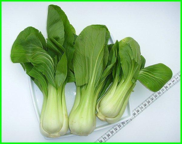 sayuran masa panen cepat, sayuran organik yang cepat panen, sayuran yang paling cepat panen, sayuran yg paling cepat panen, tanaman sayuran paling cepat panen, sayur sayuran yang cepat panen