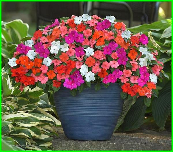 bunga yang bagus di pot kecil, bunga yg cocok di pot kecil, bunga yang cocok untuk pot kecil, tanaman bunga di pot kecil, gambar pot bunga kecil, gambar bunga dalam pot kecil, jenis bunga untuk pot kecil, pot bunga yang kecil, pot bunga kecil unik, pot bunga kecil warna warni