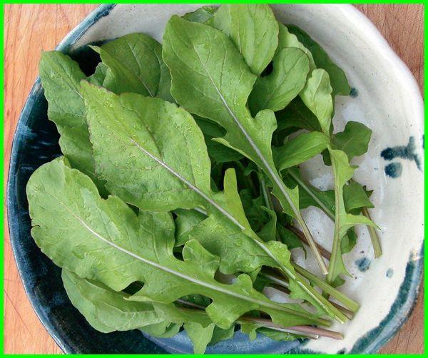 tanaman sayuran arugula