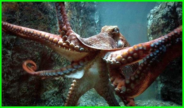 hewan laut yang kuat