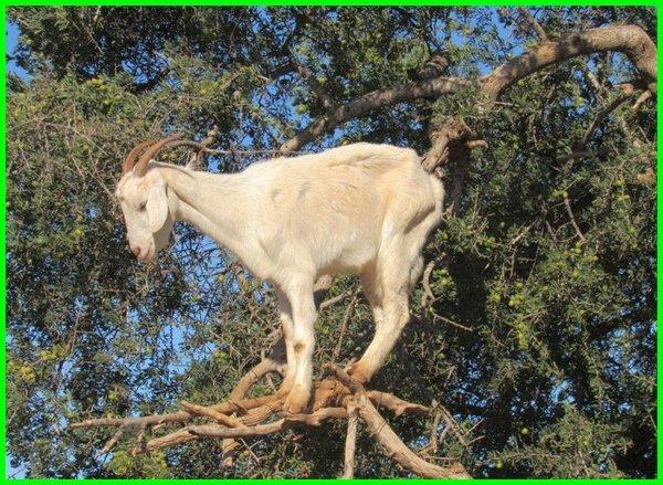 binatang memanjat pohon, binatang pandai memanjat pohon, binatang yang memanjat pohon, binatang pandai memanjat, binatang suka memanjat pohon, binatang pintar memanjat pohon