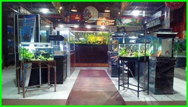Beberapa Tempat Jual Akuarium Terbaik Di Bandung Dunia Fauna Hewan Binatang Tumbuhan Dunia Fauna Hewan Binatang Tumbuhan