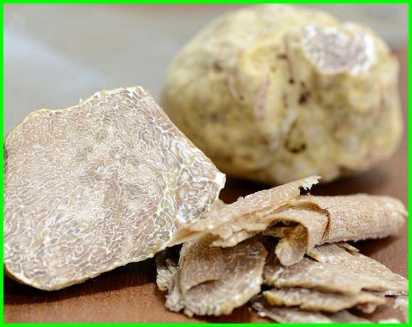 kenapa jamur truffle mahal, mengapa jamur truffle mahal, mengapa harga jamur mahal, aroma jamur truffle, apa jamur truffle, beli jamur truffle, ciri jamur truffle, jamur white truffle di indonesia, fungsi jamur truffle, gambar jamur truffle putih,habitat jamur truffle, jenis jamur truffle, khasiat jamur truffle, karakteristik jamur truffle, ciri ciri jamur truffle putih, tentang jamur truffle