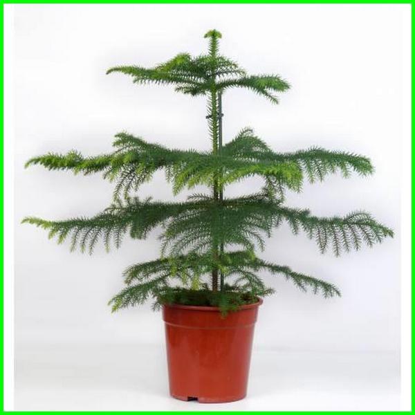 pohon untuk dalam ruangan, pohon untuk didalam ruangan, pohon hias dalam ruangan, pohon besar dalam ruangan, pohon natal ruang angkasa, pohon di ruang tamu, pohon dalam ruang tamu