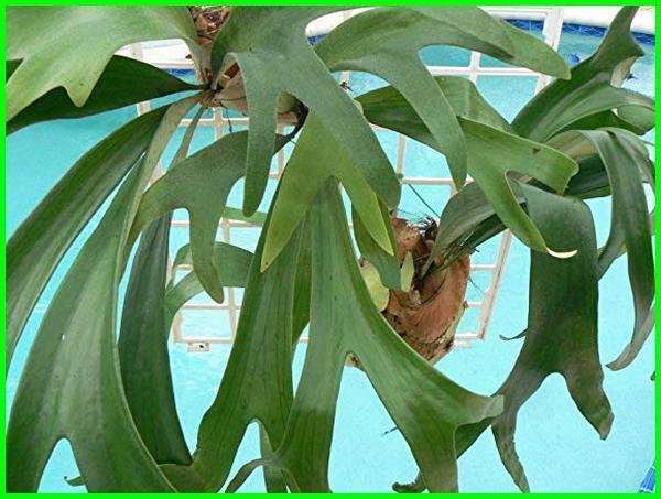 tanaman yang bisa hidup tanpa matahari, jenis tanaman tanpa sinar matahari