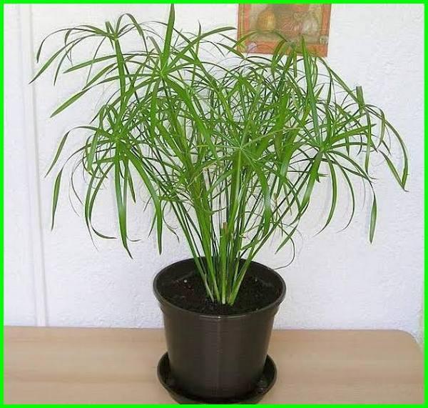 tanaman yang bisa hidup tanpa matahari, tumbuhan tanpa cahaya matahari, tanaman yang bisa hidup tanpa cahaya matahari, dapatkah tanaman melakukan fotosintesis tanpa cahaya matahari, tanaman dalam ruangan tanpa sinar matahari