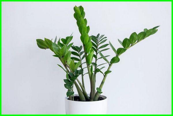 tanaman yang bisa hidup tanpa matahari, tumbuhan tanpa cahaya matahari, tanaman yang bisa hidup tanpa cahaya matahari, dapatkah tanaman melakukan fotosintesis tanpa cahaya matahari, tanaman dalam ruangan tanpa sinar matahari, jenis tanaman tanpa sinar matahari