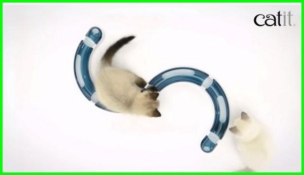 mainan kucing kecil, mainan untuk anak kucing, mainan yang bagus untuk kucing kecil