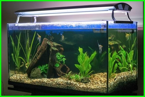 apakah lampu akuarium perlu dimatikan, apakah lampu akuarium harus nyala terus, apakah lampu akuarium harus dimatikan, apakah lampu aquarium laut harus nyala terus, kenapa lampu aquarium cepat rusak, berapa lama lampu aquarium dinyalakan, berapa lama lampu aquarium menyala, kenapa lampu aquarium mati