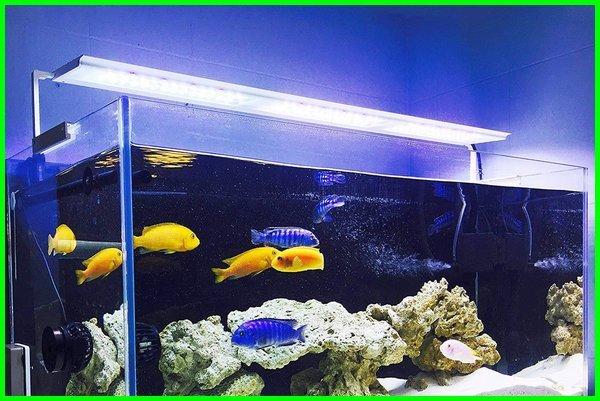 apakah lampu akuarium perlu dimatikan, apakah lampu akuarium harus nyala terus, apakah lampu akuarium harus dimatikan, apakah lampu aquarium laut harus nyala terus, berapa lama lampu aquarium dinyalakan, berapa lama lampu aquarium menyala, gambar lampu aquarium, aturan penggunaan lampu akuarium, lampu aquarium dimatikan