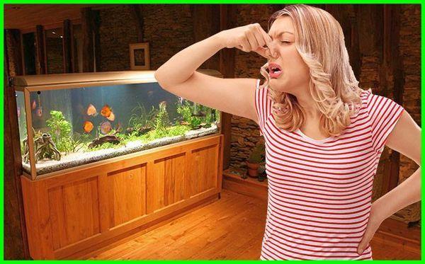 air aquarium bau amis, aquarium baru bau lem, penyebab air akuarium bau, menghilangkan bau aquarium, kenapa aquarium bau amis, penyebab aquarium bau amis, mengatasi aquarium bau amis, aquarium laut bau amis, supaya akuarium tidak bau amis, cara supaya akuarium tidak bau amis, aquarium bau amis, air akuarium bau