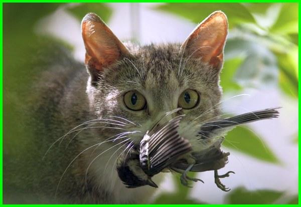 kucing tanpa makanan, kucing bertahan tanpa makan, berapa lama kucing tanpa makan, berapa lama kucing bertahan tanpa makan dan minum, berapa lama kucing bertahan hidup tanpa makan dan minum, berapa lama kucing bertahan tanpa makan, berapa lama kucing bertahan tanpa makan minum, berapa lama kucing bertahan tanpa makanan, berapa lama kucing bertahan tidak makan dan minum