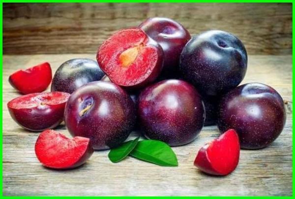 cara makan buah plum dikupas atau tidak, cara makan buah plum secara langsung, cara makan buah plum hitam, cara makan buah plum asli, cara memakan buah plum asli cara makan buah plum untuk diet, cara makan buah plum segar, cara memakan buah plum yang benar, bagaimana cara memakan buah plum, bagaimana cara mengkonsumsi buah plum, cara makan.buah plum, cara memakan buah plum diet