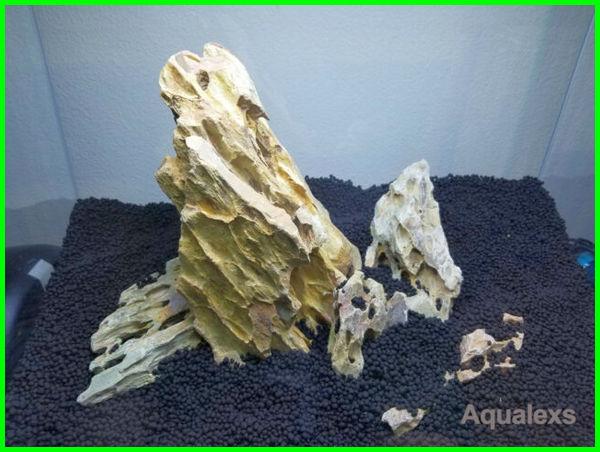 dekorasi aquarium yang bagus, dekorasi aquarium dari batu, contoh dekorasi aquarium sederhana, gambar dekorasi aquarium, dekorasi aquarium hias, hiasan dekorasi aquarium, dekorasi aquarium predator