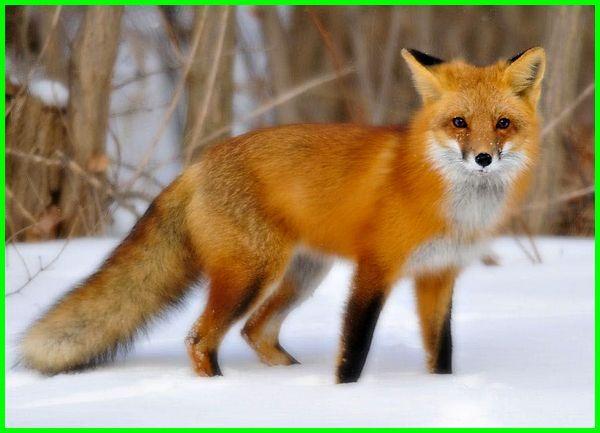 hewan endemik jepang, hewan negara jepang, hewan khas di jepang, jenis hewan di jepang, hewan misterius di jepang, hewan hewan jepang, gambar hewan khas jepang, nama hewan lucu jepang, hewan khas negara jepang